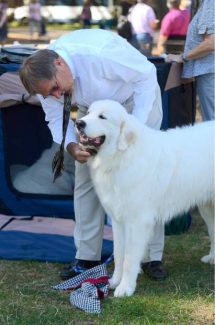 Dogs, dogs, dogs at Nevada County Fairgrounds this weekend