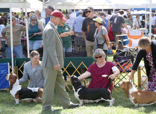 Competitors present their dogs to a judge during the Gold Country Kennel Club Dog Show at the Nevada County Fairgrounds Saturday afternoon. 170 dog breeds competed at the American Kennel Club affiliated show.