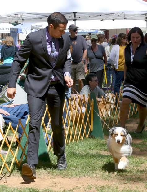 Competitors present their dogs during the Gold Country Kennel Club Dog Show at the Nevada County Fairgrounds Saturday afternoon.