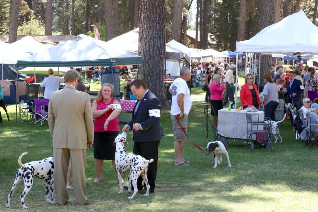 The Gold Country Kennel Club Dog Show had over 40 vendors at the Nevada County Fairgrounds Saturday afternoon.