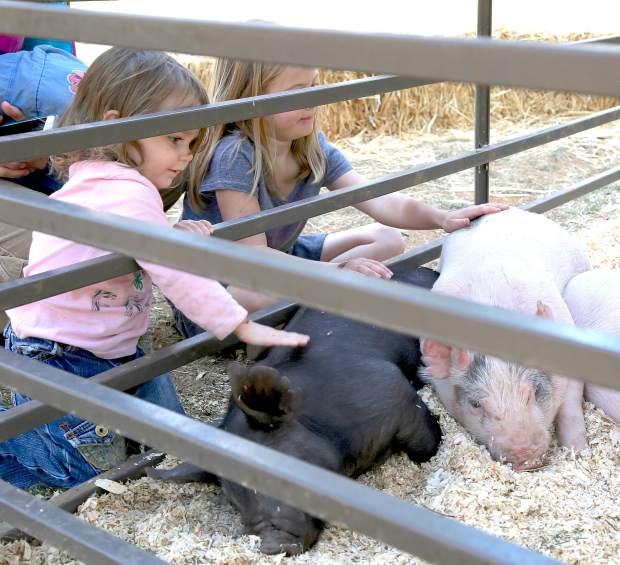 Maggie and CC Neiser pet pigs during the second annual Farm Day organized by the Nevada County Resource Conservation District. Farm day was opening day of the Draft Horse Classic at the Nevada County Fairgrounds Thursday.