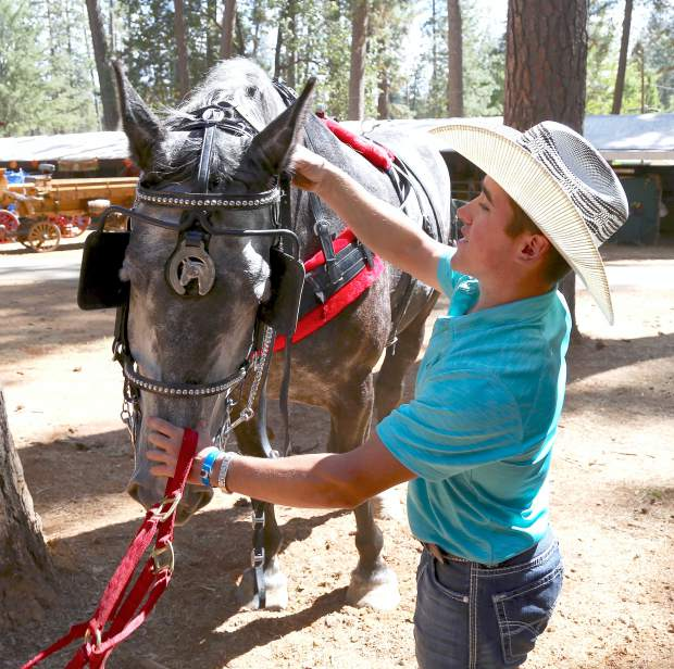 Edwin Raber removes his horse's bridle during opening day of the Draft Horse Classic at the Nevada County Fairgrounds Thursday.