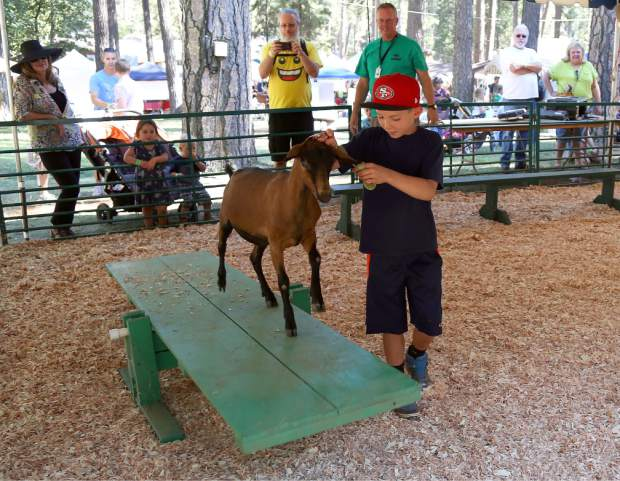 Lucas Benson leads his goat over the teeter-totter in the Pygmy Goat Obstacle Course at the Nevada County Fair on Thursday.