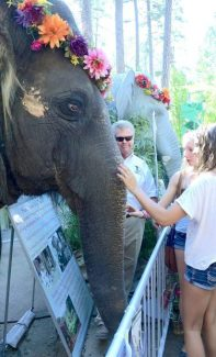 Two young fair goers pet an elephant at the 2013 Nevada County Fair.