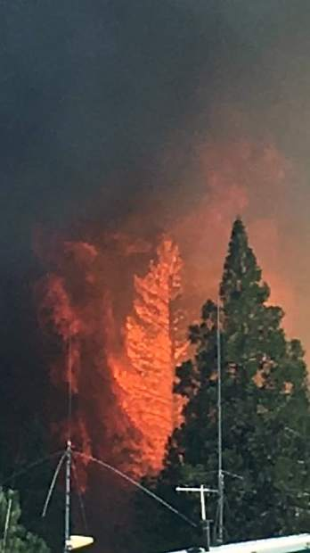 Flames quickly consume a tree Saturday afternoon. Cal Fire officials say the blaze created spot fires due to debris from dead trees killed by bark beetle infestations.