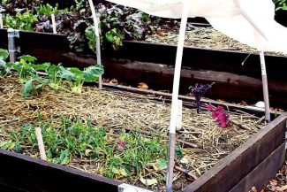 Ann Wright: Rain drenched, garden-ready — March gardening tips from Nevada County Master Gardeners