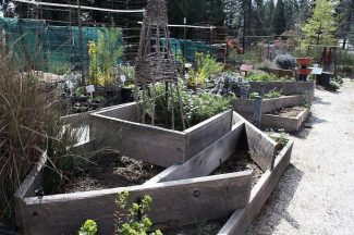 Ann Wright: Cold to Hot — Spring Gardening in Nevada County