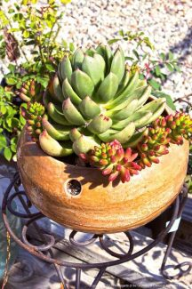 Container gardening workshop April 30 with Nevada County Master Gardeners