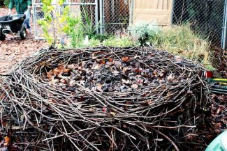 Ann Wright: August composting tips