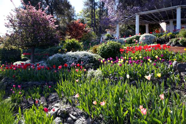Spring has arrived at Ananda VIllage on the San Juan Ridge. The community will open its gardens to the public starting today for its annual Springtime at Ananda Festival.