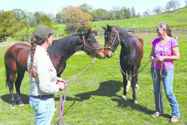 From Wild To Mild Horse Trainers Set To Compete In