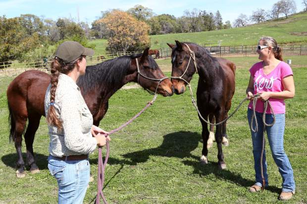 Image result for Horse Trainers