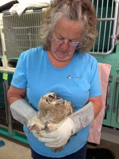 March 5 orientation meeting set in Grass Valley for volunteer workers with Wildlife Rehabilitation and Release