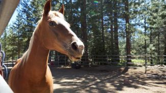 Improvements under way at Tahoe Donner Equestrian Center