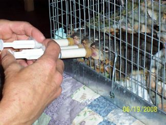 Squirrel care training offered Saturday in Grass Valley