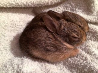 Protecting wildlife in the spring: Tips from Wildlife Rehabilitation & Release