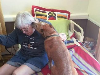 The blessing of Baylee: Dog rescues owner by fetching help