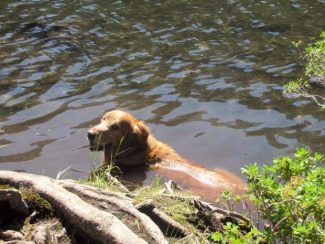 Joan Merriam: Dive right in: Water fun for you and your dog