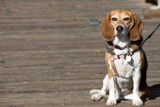 Joan Merriam: Minding your dog's manners