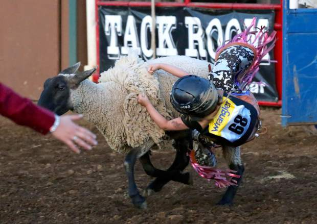 Gemma Kelly mutton busting at the Penn Valley Rodeo Friday evening.