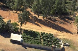 FILE — Marijuana grows can be found all over Nevada County, as evidenced by this photo taken during a flyover in 2011.