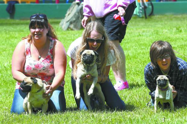 Pug puppies and pug owners prepare for the Pug Sunday Pug Race at Western Gateway Park in Penn Valley Sunday morning. 21 pugs competed in the competition hosted by Kellen Fisher. All donations go towards Daisy's Senior Paw Connection.