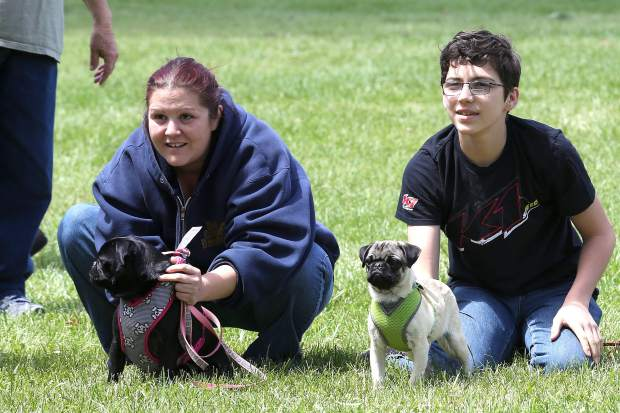 Pug puppies and pug owners prepare for the Pug Sunday Pug Race at Western Gateway Park in Penn Valley Sunday morning.