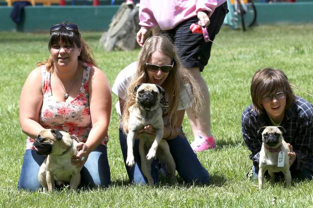 Pugs compete in the Pug Sunday Pug Races at Western Gateway Park in Penn Valley Sunday morning. Twenty-one dogs participated in the event hosted by Kellen Fisher. With three divisions — puppy, adult, and seniors — everyone received prizes, and all donations went towards Daisy's Senior Paw Connection.