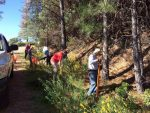 Tahoe National Forest employees in Nevada City spent Wednesday  morning pulling invasive plants on the popular Sugarloaf Mountain Trail.