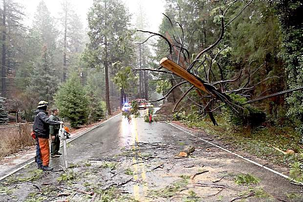 A tree fell on power lines near Empire Mine, causing Highway 174 to close last Tuesday morning.