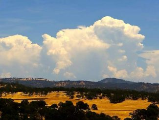 Dry, golden grass accented by puffy clouds in South Nevada County.