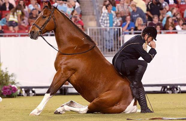 Meet tommie turvey at draft horse classic theunion tommie turvey equine extremist who will be performing at this years draft horse classic will be featured at a meet and greet from 2 3 pm on saturday m4hsunfo