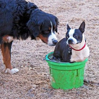 Two dogs get to know each other at Dogs Run Free, the off-leash dog park in Condon Park, Grass Valley.