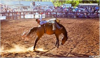 Rodeo ride into summer
