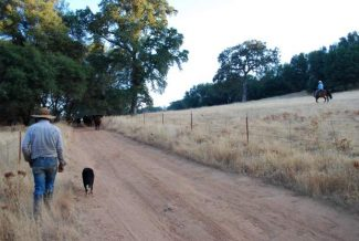 Finding freedom on the range: Local rancher Jim Gates connects with Land Trust to feed the community