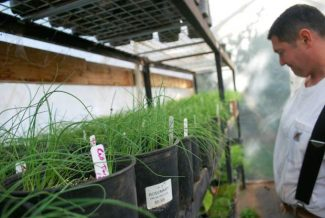 Nevada County farm gets global support for expansion and organic certification