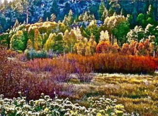 First Glance: Don Baldwin's photos on display at Summer Thyme's