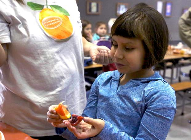 Margaret G. Scotten Elementary School student Bella Abundiz-Jimenez tastes a Cara Cara and Blood Orange from Sunset Ridge Fine Fruits in Newcastle during Sierra Harvest's Citrus Tasting Thursday afternoon.