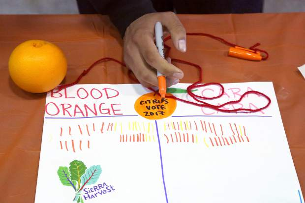 Margaret G. Scotten Elementary School students vote on their favorite orange during Sierra Harvest's citrus tasting Thursday afternoon.