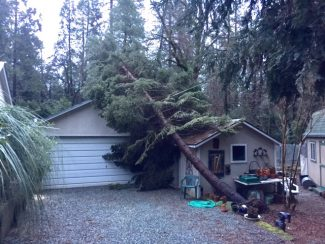 A tree fell on this building over the weekend on Old Washington Road near Nevada City. (Photo submitted by Jeannette Bear)