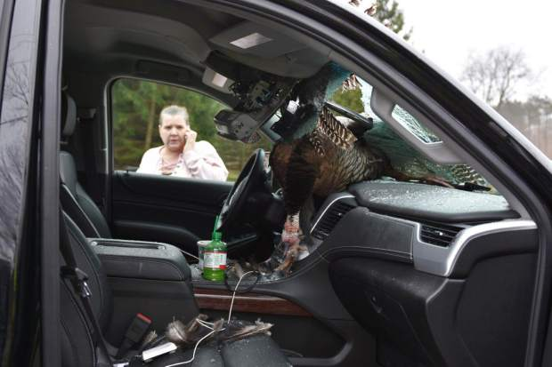 Family gets a shock when turkey crashes through windshield for Laporte county jobs