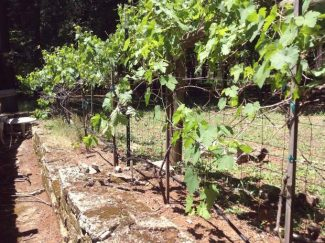 Rod Byers: Vineyard quest — Expert 'wine guy' decides it's time to give vines a try