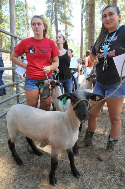 Bear River High School's Magdelyn O'Callaghan (left) and her sister Grace O'Callaghan wait in line to officially weigh their sheep for the 2017 Nevada County Fair market and showmanship competitions.