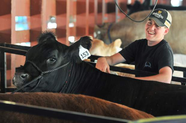 Justin Volheim shows off his Black Angus that he raised for this year's Nevada County Fair from the Kentucky Flat 4-H.