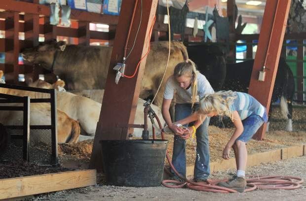 Farm animals of all kinds including goats, sheep,rabbits, goats, sheep, chickens, and cattle fill the pens ready for the 2017 Nevada County Fair.