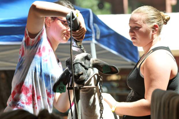 Chicago Park 4-Hers Gracie Suenram (left) shears A.J. King's sheep Tuesday afternoon at the Nevada County Fairgrounds in anticipation of the sheep showmanship competition, which will take place this morning.