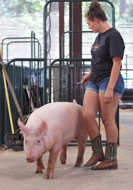 Nevada Union FFA's Aryanna Wahl walks her pig to the washing station Tuesday afternoon at the swine barn of the Nevada County Fairgrounds in anticipation of the market and showmanship competitions.