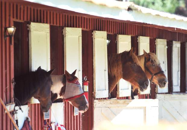 Horses occupy the horse barn at the Nevada County Fairgrounds during the 2017 Draft Horse Classic.