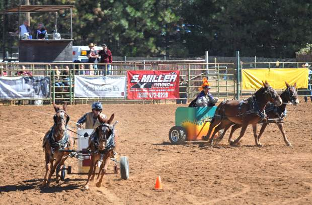 Mule chariot races provide for entertainement in between competitions at the arena fairgrounds.