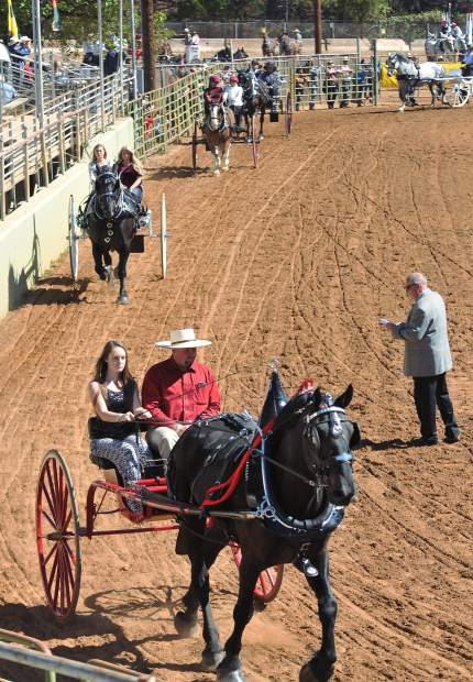 A judge gets a close look at the junior competitors Saturday in the fairgrounds arena during the 2017 Draft Horse Classic.